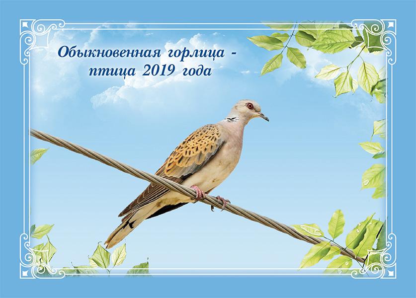 bird2019-01