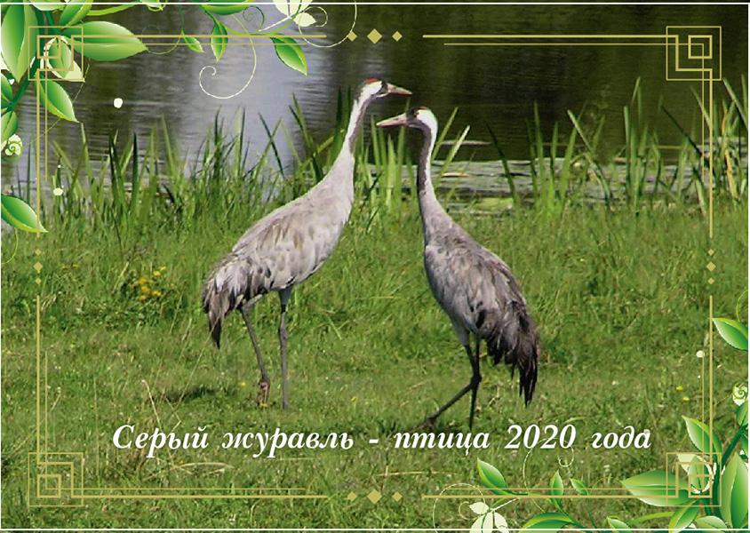 bird2020-01