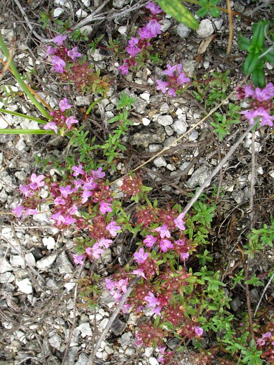 Степная растительность («Курская ботаническая аномалия ...