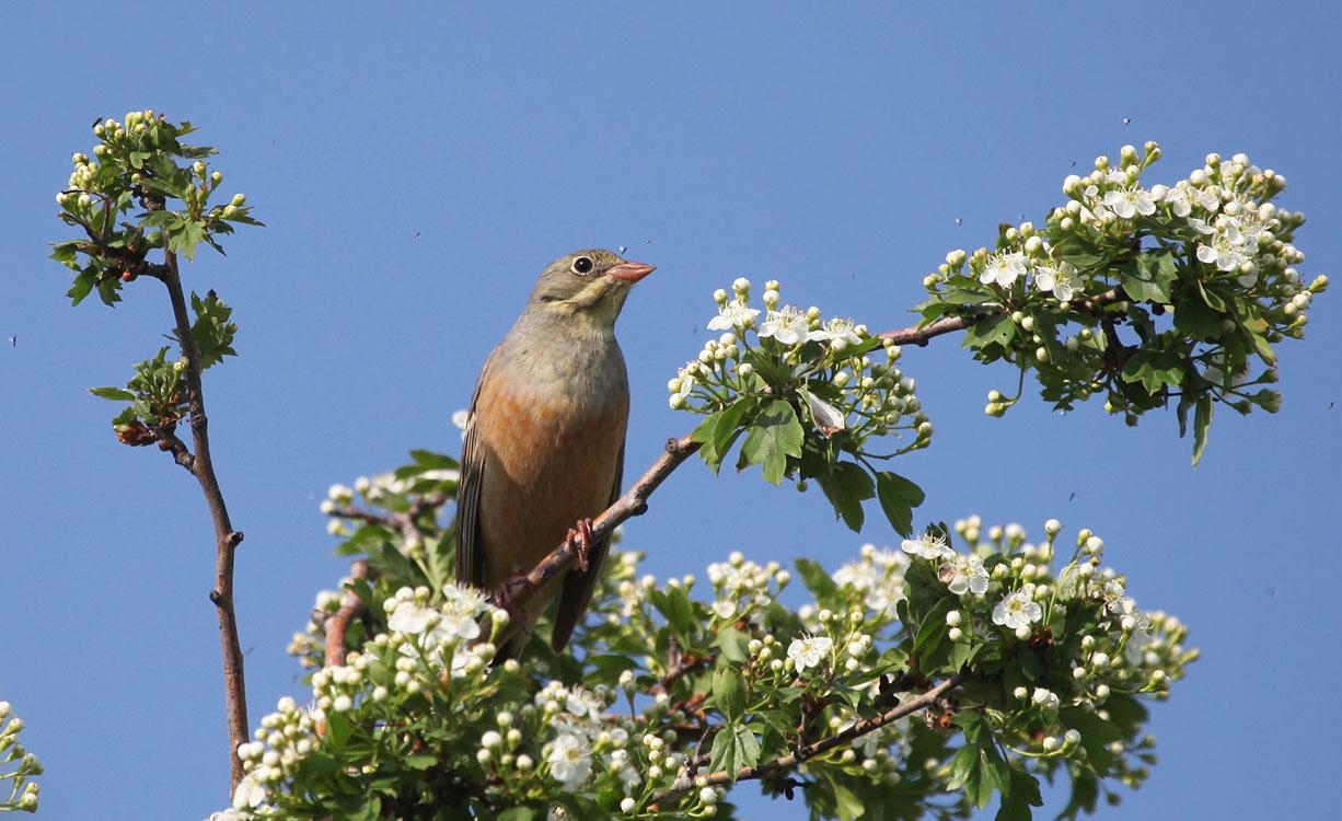Пение птиц в лесу MP3 скачать бесплатно, музыка пение